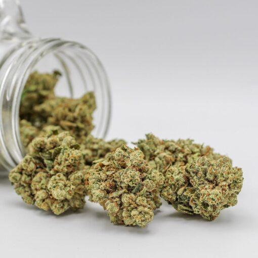 buy tahoe hybrid | buy tahoe OG cannabis strain | buy tahoe OG marijuana strain | buy tahoe OG strain | buy tahoe OG online