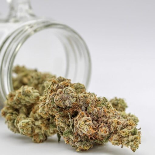 buy cherry mintz | buy cherry mintz marijuana strain | buy cherry mintz online | cherry kush