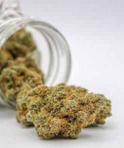 buy marijuana strain review 2021 | buy gelato cannabis strain | buy gelato marijuana strain information | buy gelato strain | buy gelato marijuana strain online