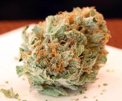 God's Gift marijuana strain