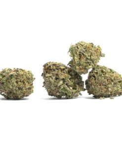 Buy God's Gift marijuana strain | buy God's Gift Marijuana Strain online | buy God's Gift Marijuana Strain Texas | buy God's Gift Marijuana Strain Arizona |